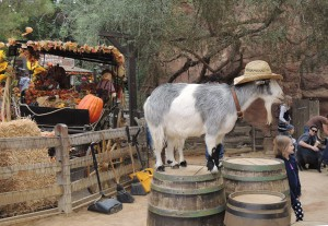 Disneyland's five-legged goat