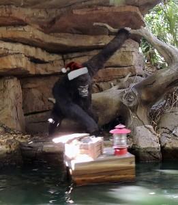 2013-1204-Gorilla-hat