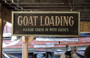 Disneyland goat loading zone sign