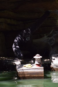 Cultivating the Magic tour: Jungle Cruise gorilla